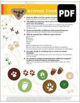Sunbeam Animal Footprints Award – PDF Download