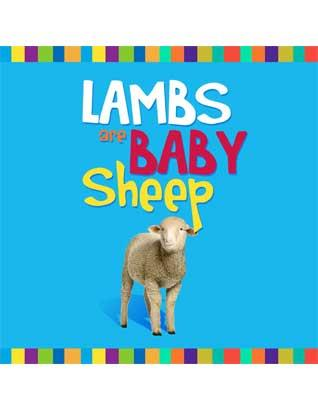 Lambs are Baby Sheep